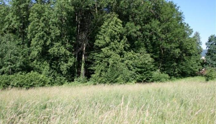 4  Blick vom GST auf Wald